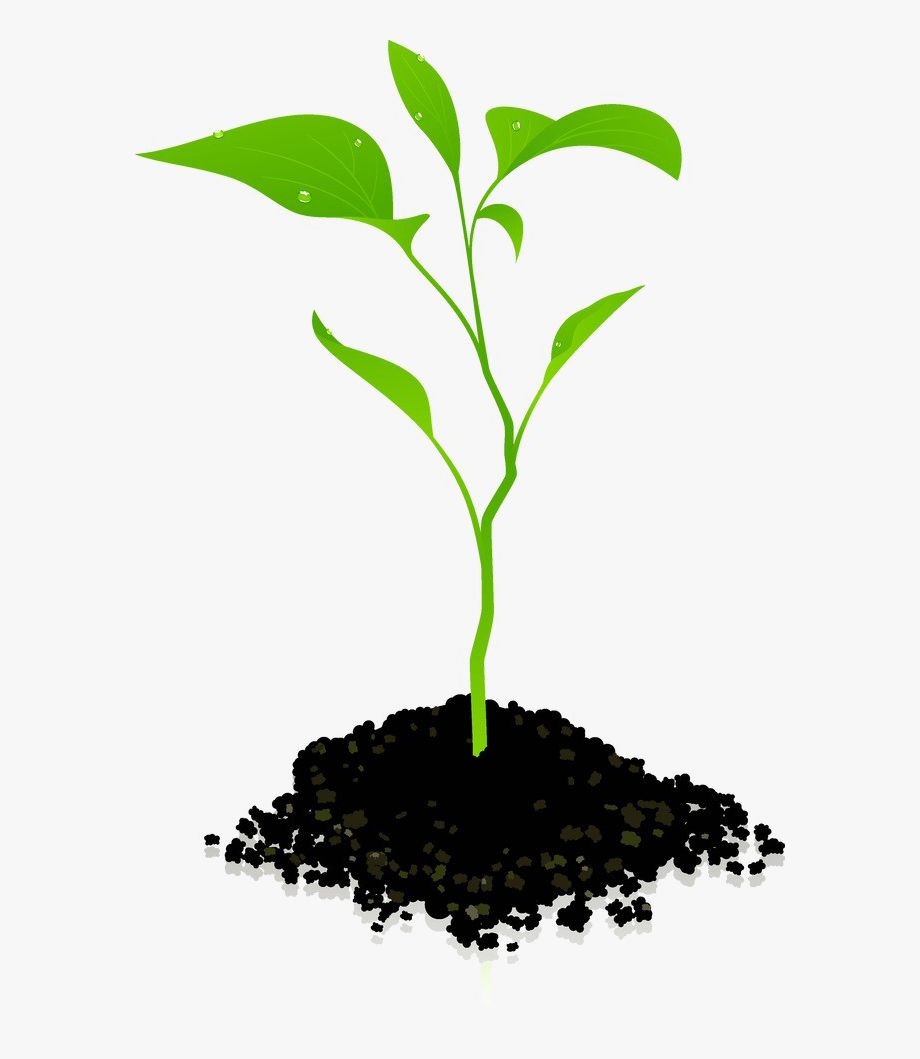 Plant grow clipart png black and white download Growing Plant Png Photos - Transparent Background Plant ... png black and white download