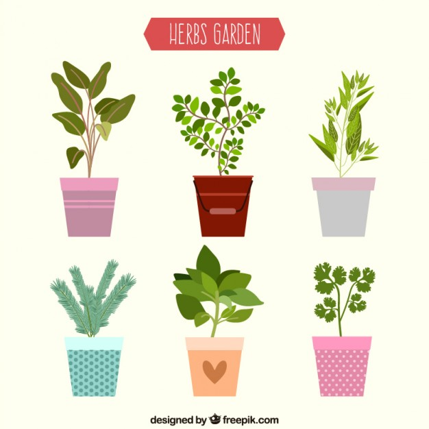 Plant images free download graphic free library Plant Vectors, Photos and PSD files | Free Download graphic free library