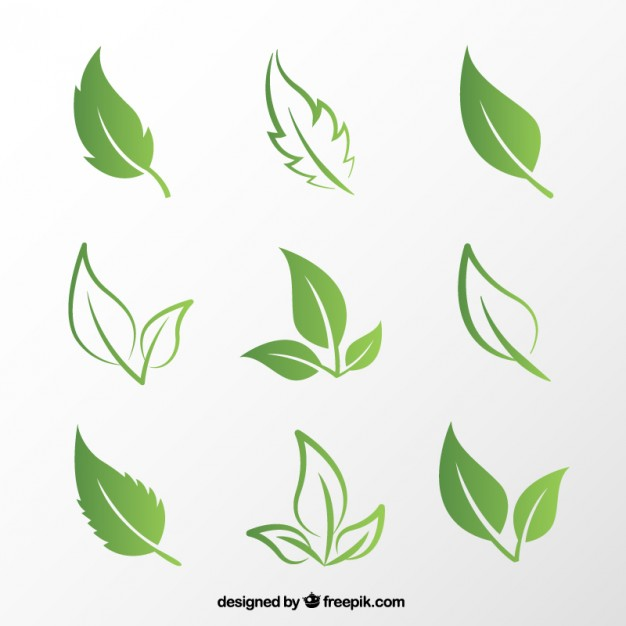 Plant images free download png free stock Plant Vectors, Photos and PSD files | Free Download png free stock