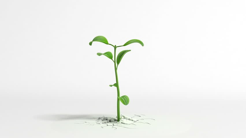 Plant images free download svg royalty free stock Plant Free Video Clips - (323 Free Downloads) svg royalty free stock