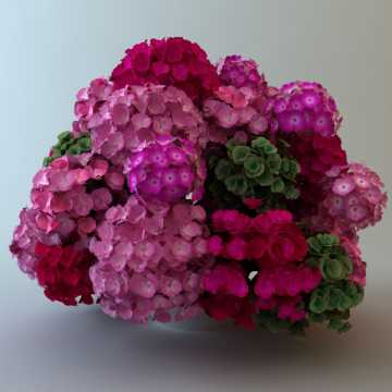 Plant images free download clipart free Plants 3D Models - Free 3D Plants download clipart free
