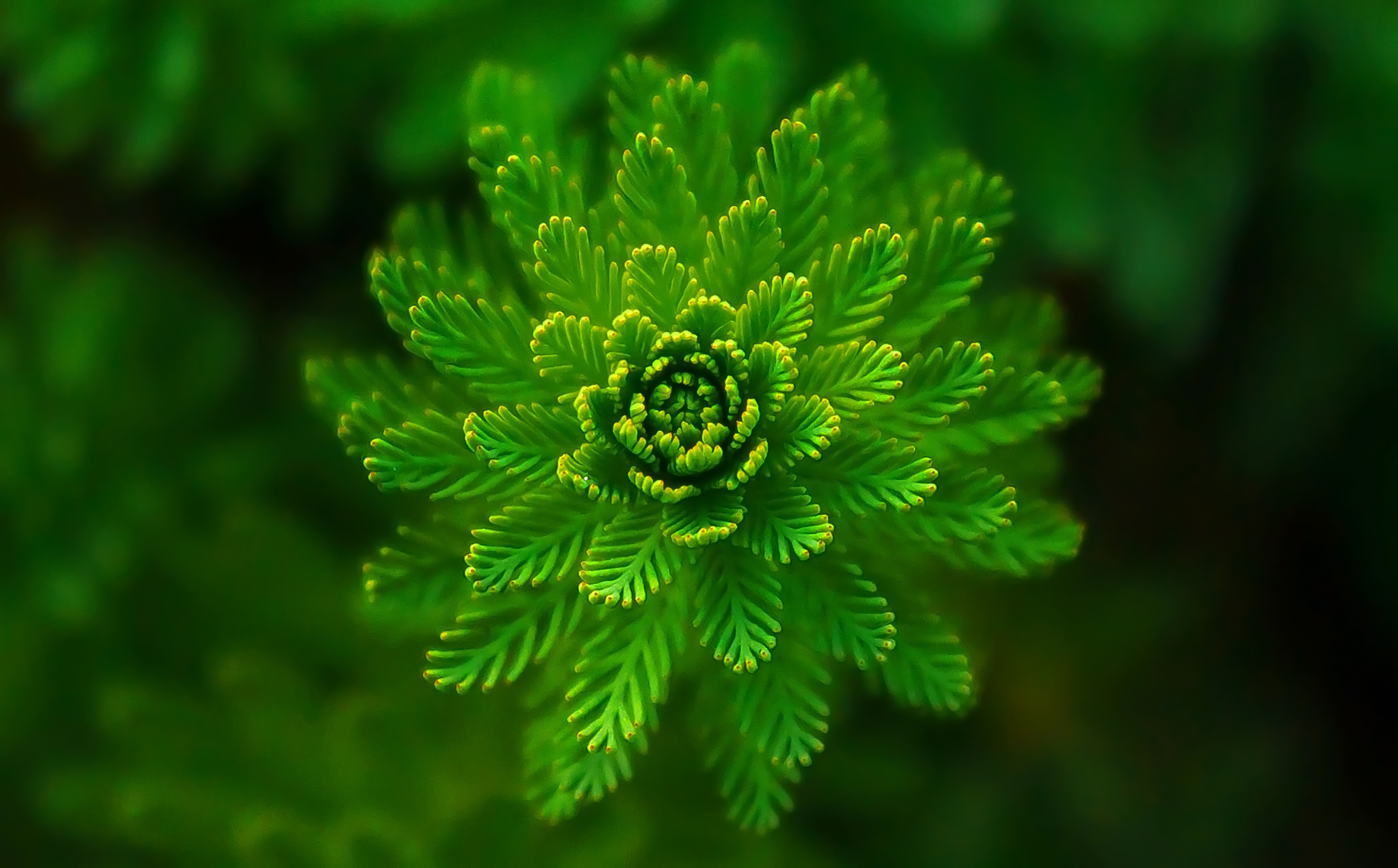 Plant images free download banner free library Free stock photo of abstract, green, plant banner free library