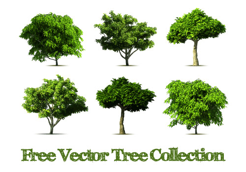 Plant images free download banner transparent stock Realistic tree vector design graphics - Vector Plant free download banner transparent stock
