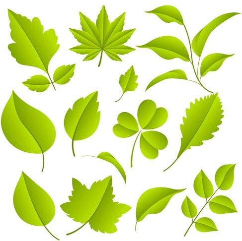 Plant images free download royalty free Green Leaves Vector Graphic Set - Vector Plant free download royalty free