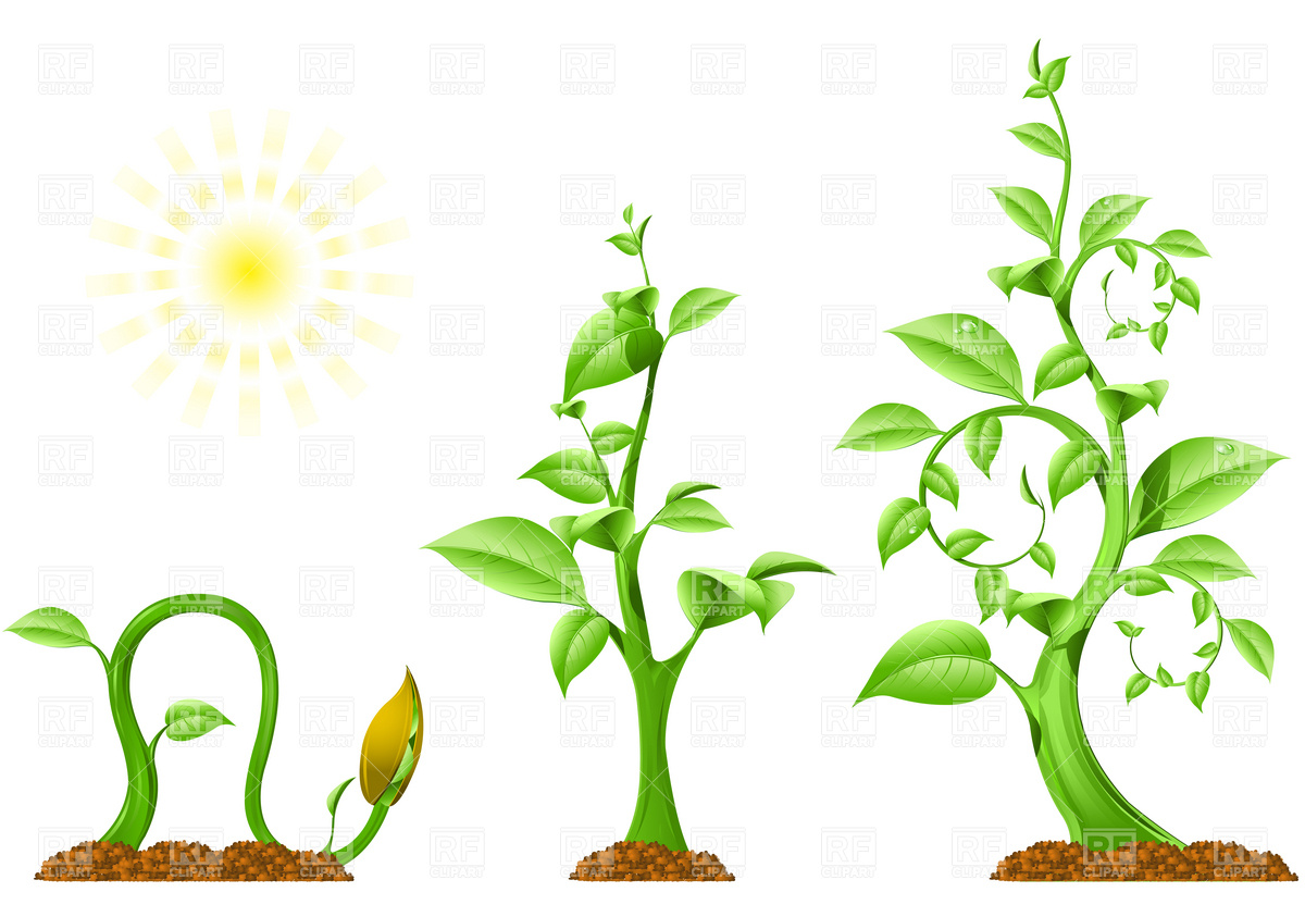 Plant images free download clipart download Free plant clipart - ClipartFest clipart download
