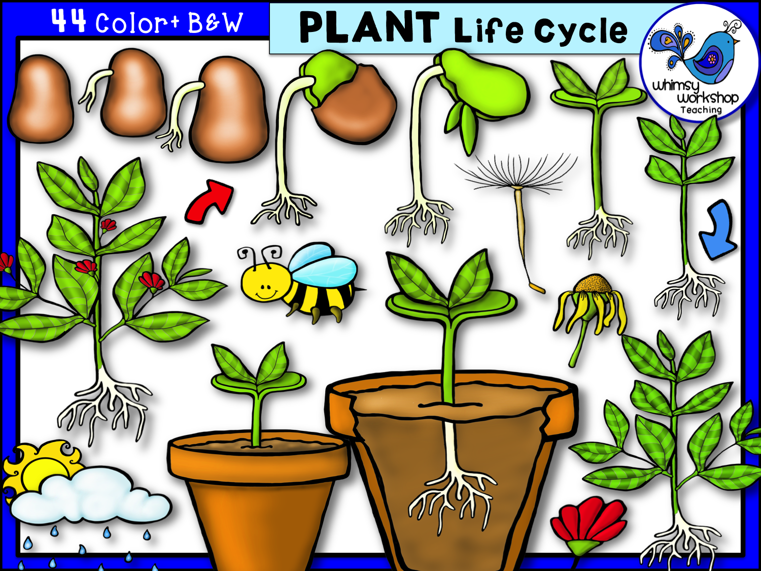Plant life clipart transparent Plant Life Cycle Clip Art - Whimsy Workshop Teaching | R.p. transparent