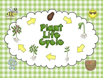 Plant life clipart svg library download Plant life cycle clipart 2 » Clipart Station svg library download