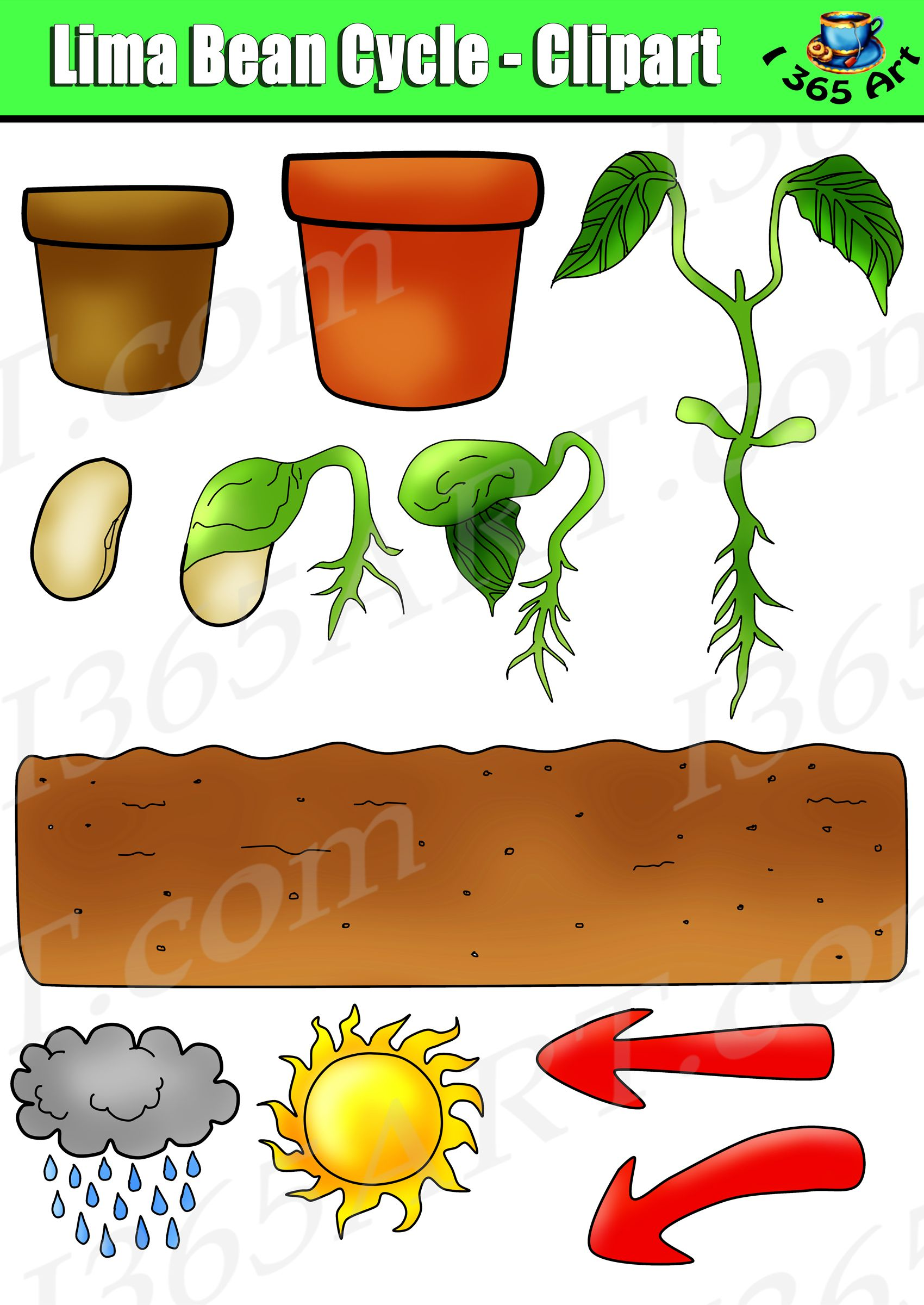 Plant life clipart image library stock Plant Life Cycle Clipart - Lima Bean Set - Color & Black ... image library stock