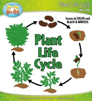 Plant life cycle clipart svg free stock Plant life cycle clipart - ClipartFest svg free stock
