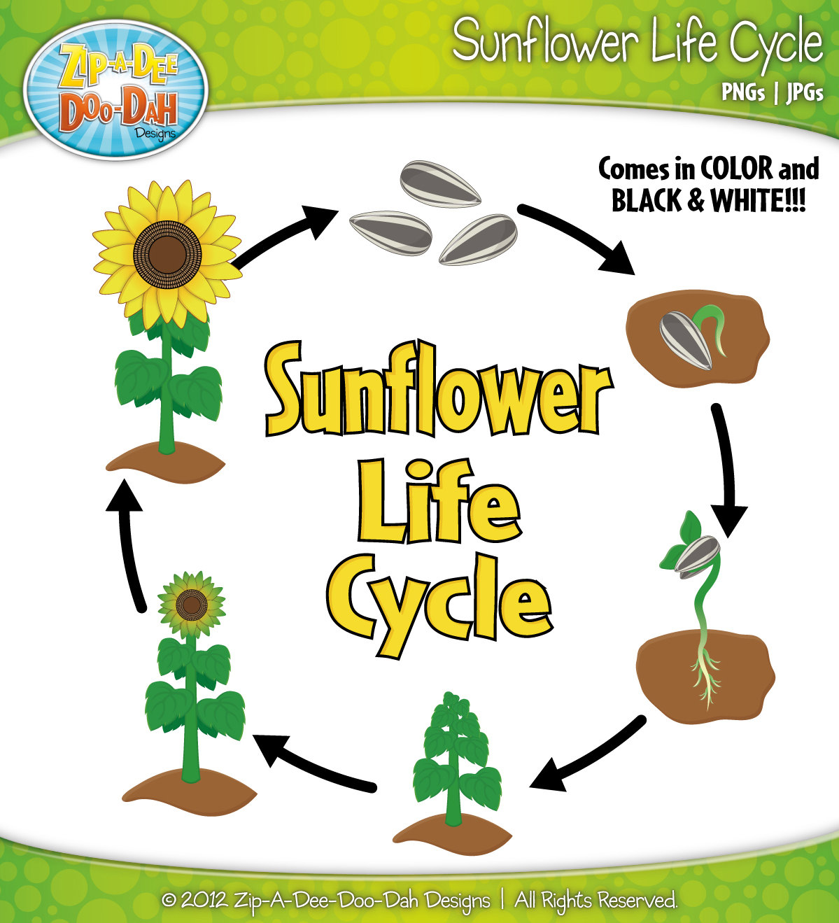Plant life cycle clipart graphic freeuse Life cycle of a plant clipart - ClipartFest graphic freeuse
