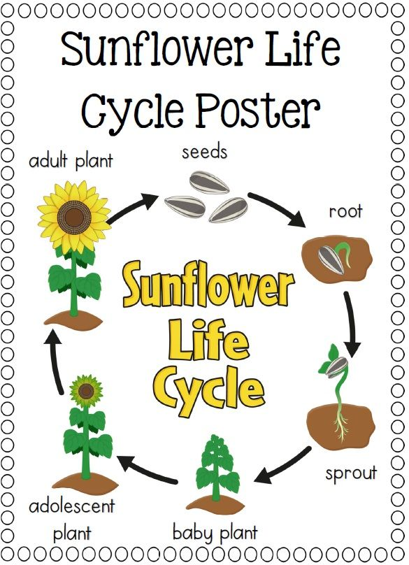 Plant life cycle clipart jpg royalty free Pumpkin Life Cycle Clipart - Clipart Kid jpg royalty free