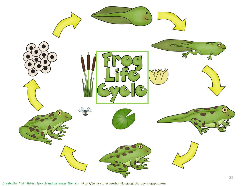Plant life cycle clipart png freeuse download Clipart life cycle - ClipartFest png freeuse download