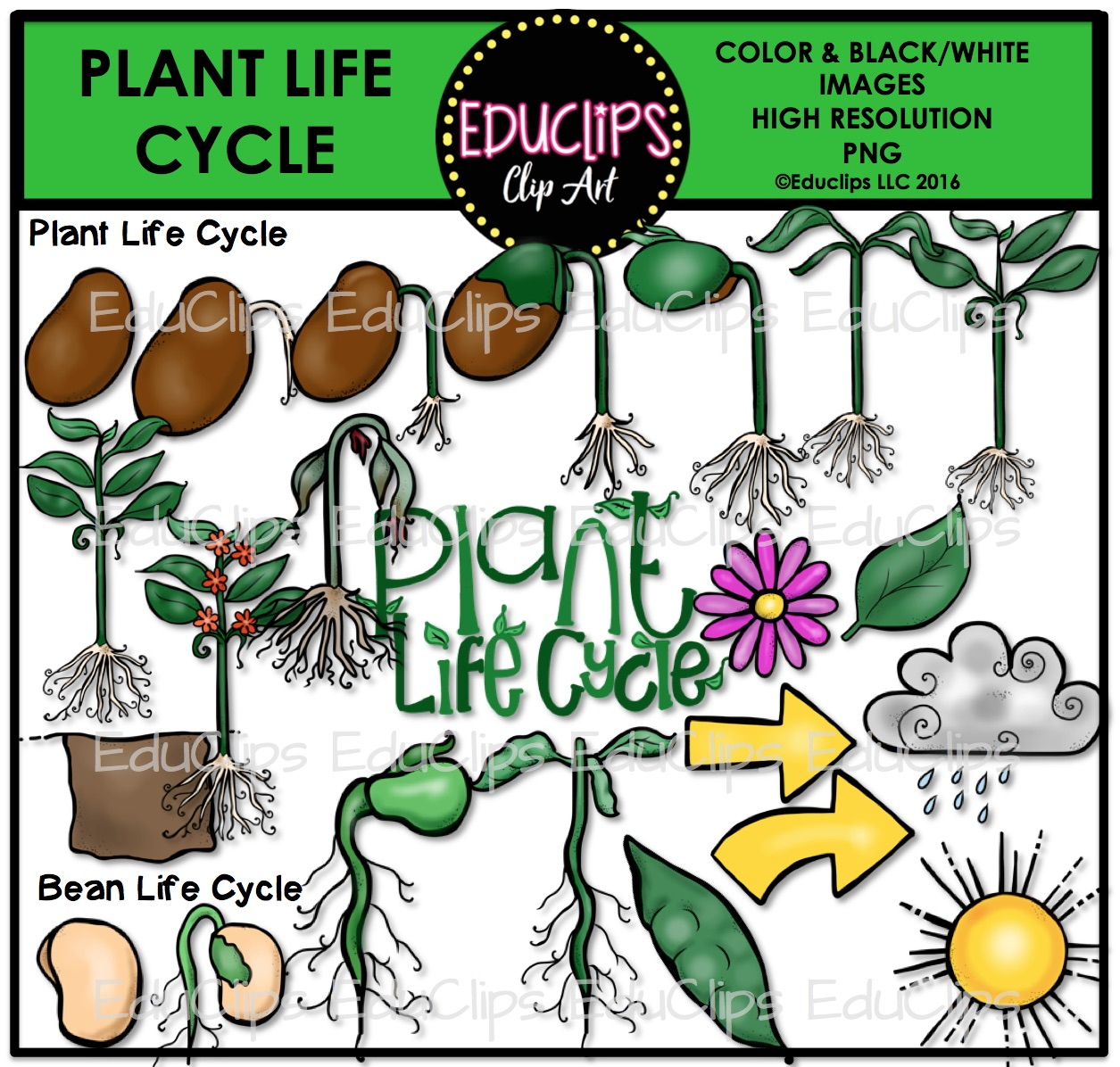 Plant life cycle clipart picture royalty free library Plant Life Cycle Clip Art Bundle (Color and B&W) | Welcome to ... picture royalty free library