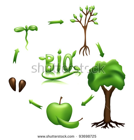 Plant life cycle clipart clipart stock Plant Life Cycle Stock Images, Royalty-Free Images & Vectors ... clipart stock