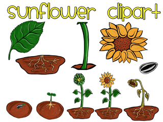 Plant life cycle clipart image freeuse stock Plant life cycle clipart - ClipartFest image freeuse stock