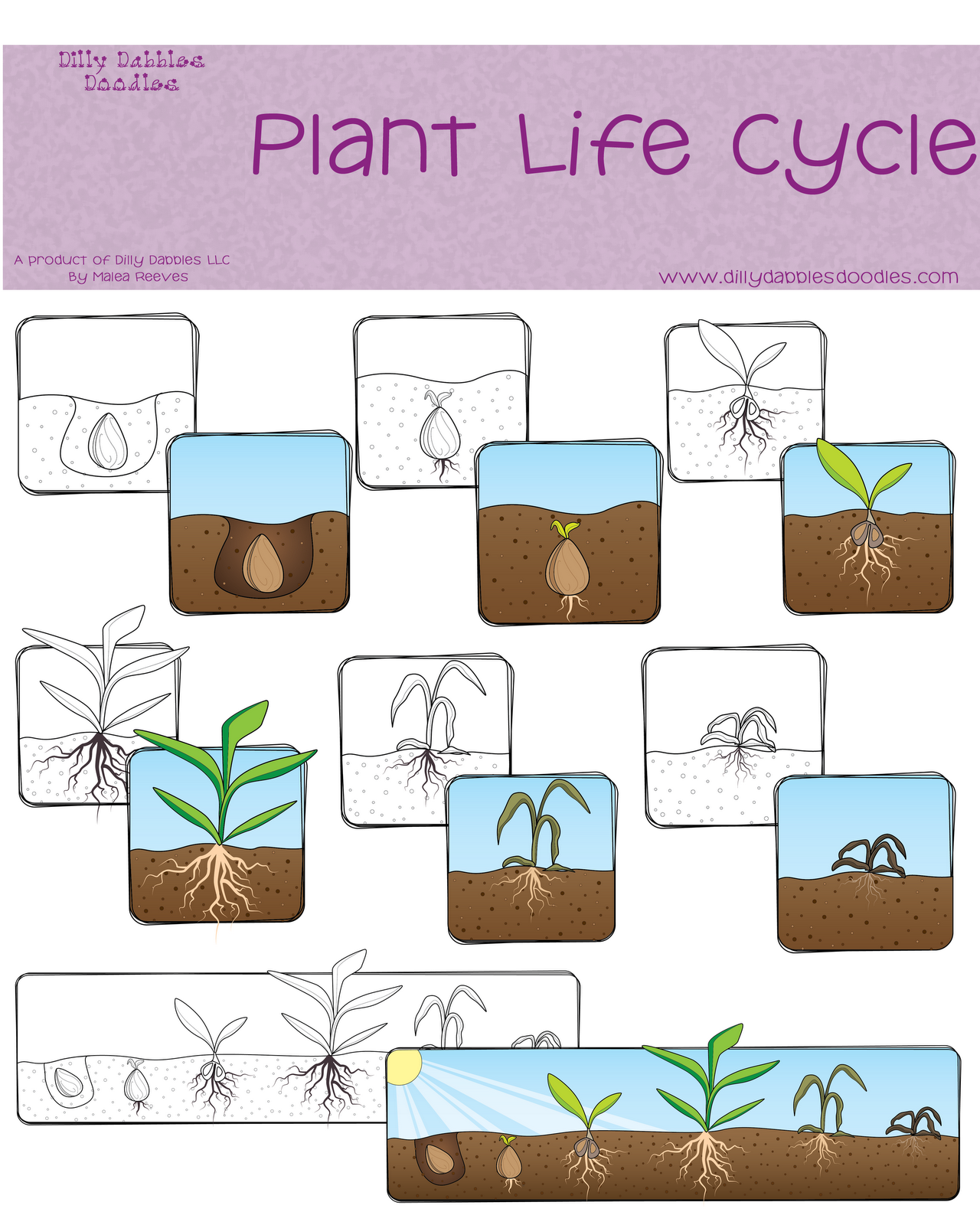 Plant life cycle clipart png black and white Plant Life Cycle Freebie | Posts, Student-centered resources and ... png black and white