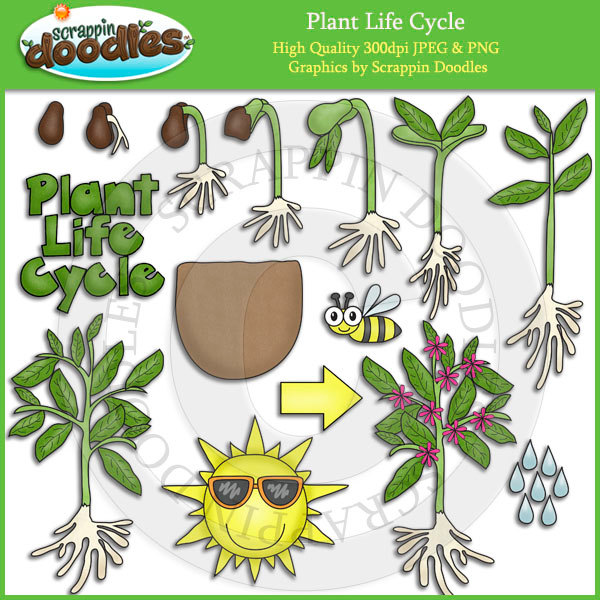 Plant life cycle clipart clipart library Plant life cycle clipart - ClipartFest clipart library