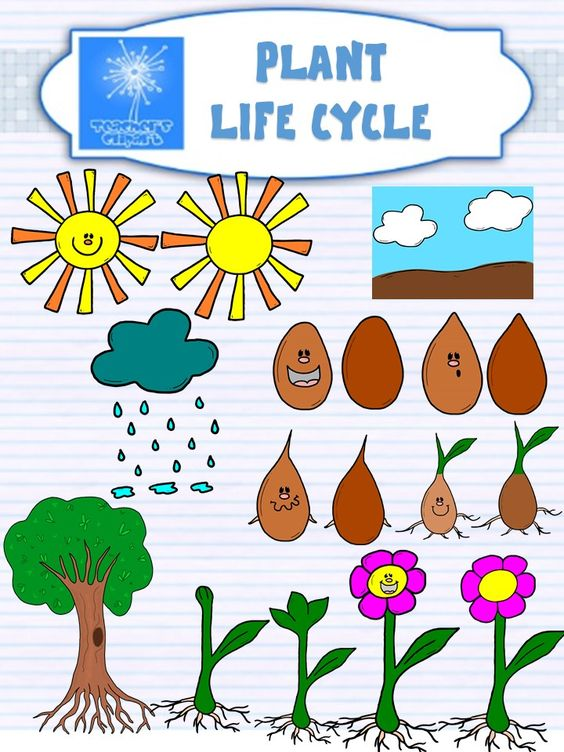 Plant life cycle clipart black and white library Plant life cycle CLIPART {with and without faces} | Life cycles ... black and white library