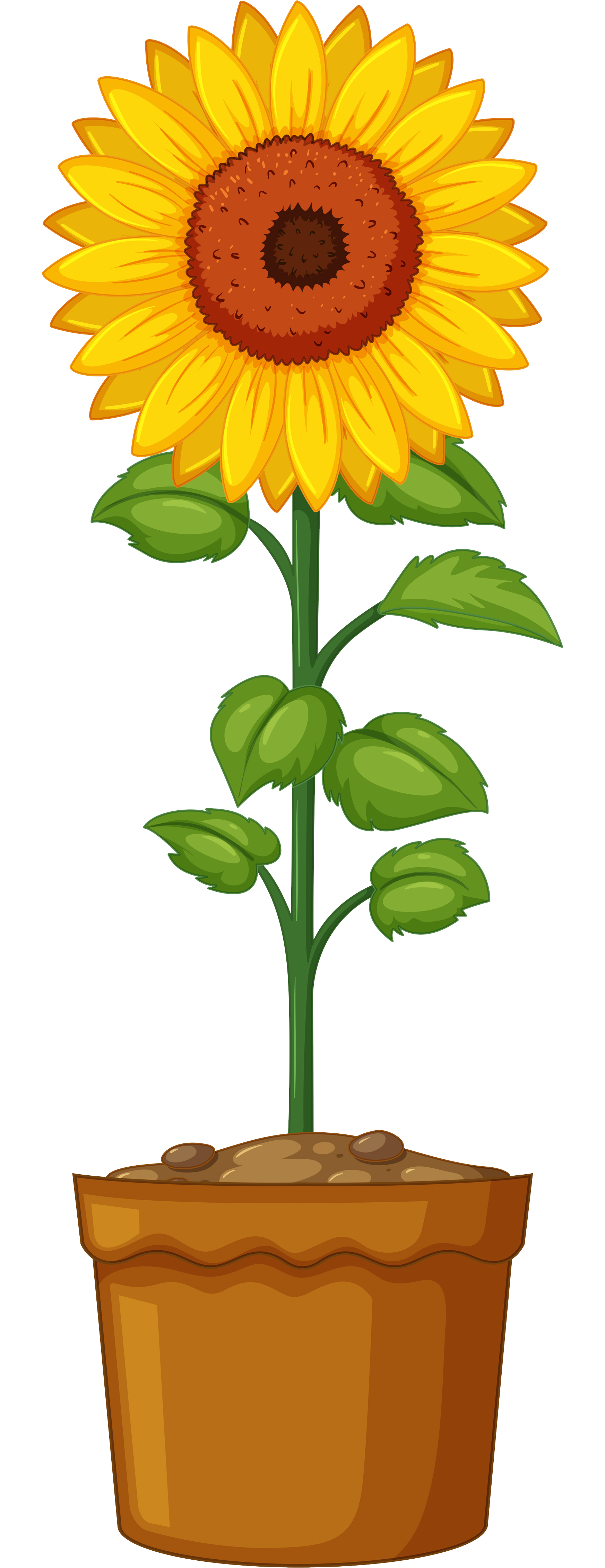 Planting flower clipart graphic free library Britton Sunflower Planting | Lenawee District Library graphic free library