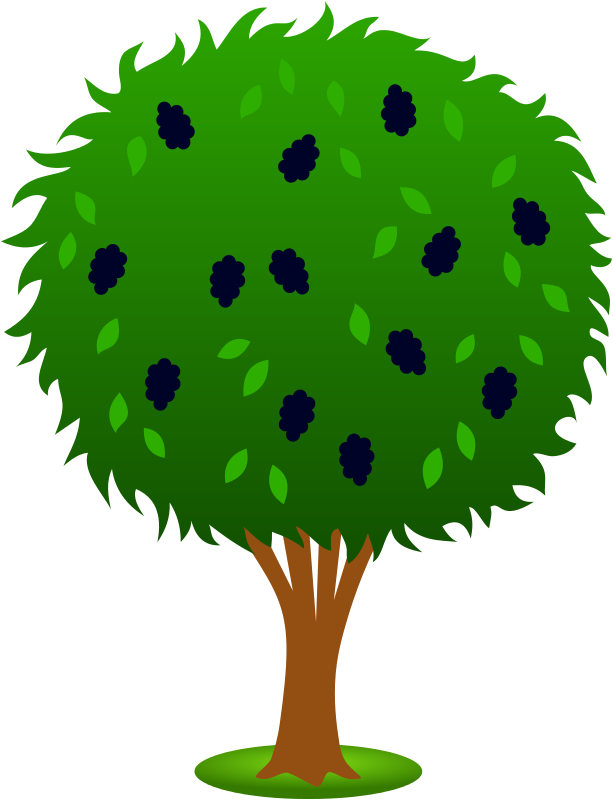 Planting tree clipart picture transparent download Mulberry blueberry plant clipart - Clipground picture transparent download