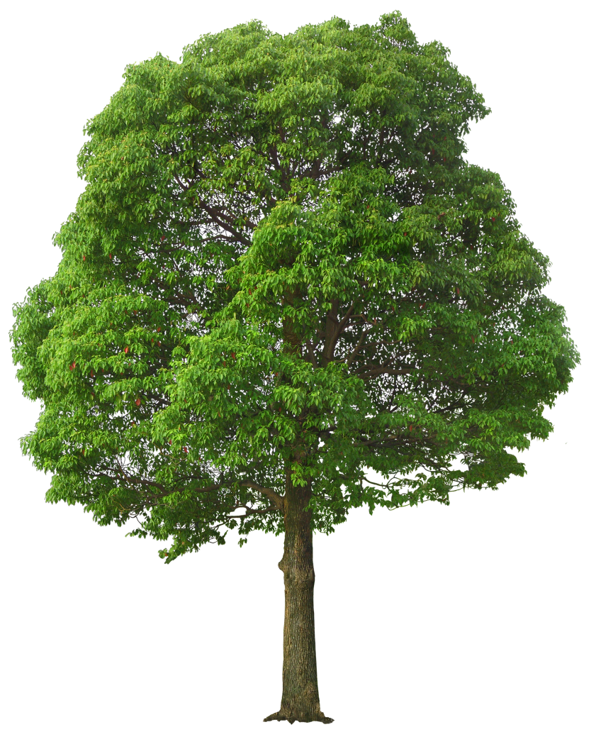 Planting tree clipart freeuse download Large_Green_Tree_PNG_Picture.png (841×1032) | g | Pinterest | AutoCAD freeuse download