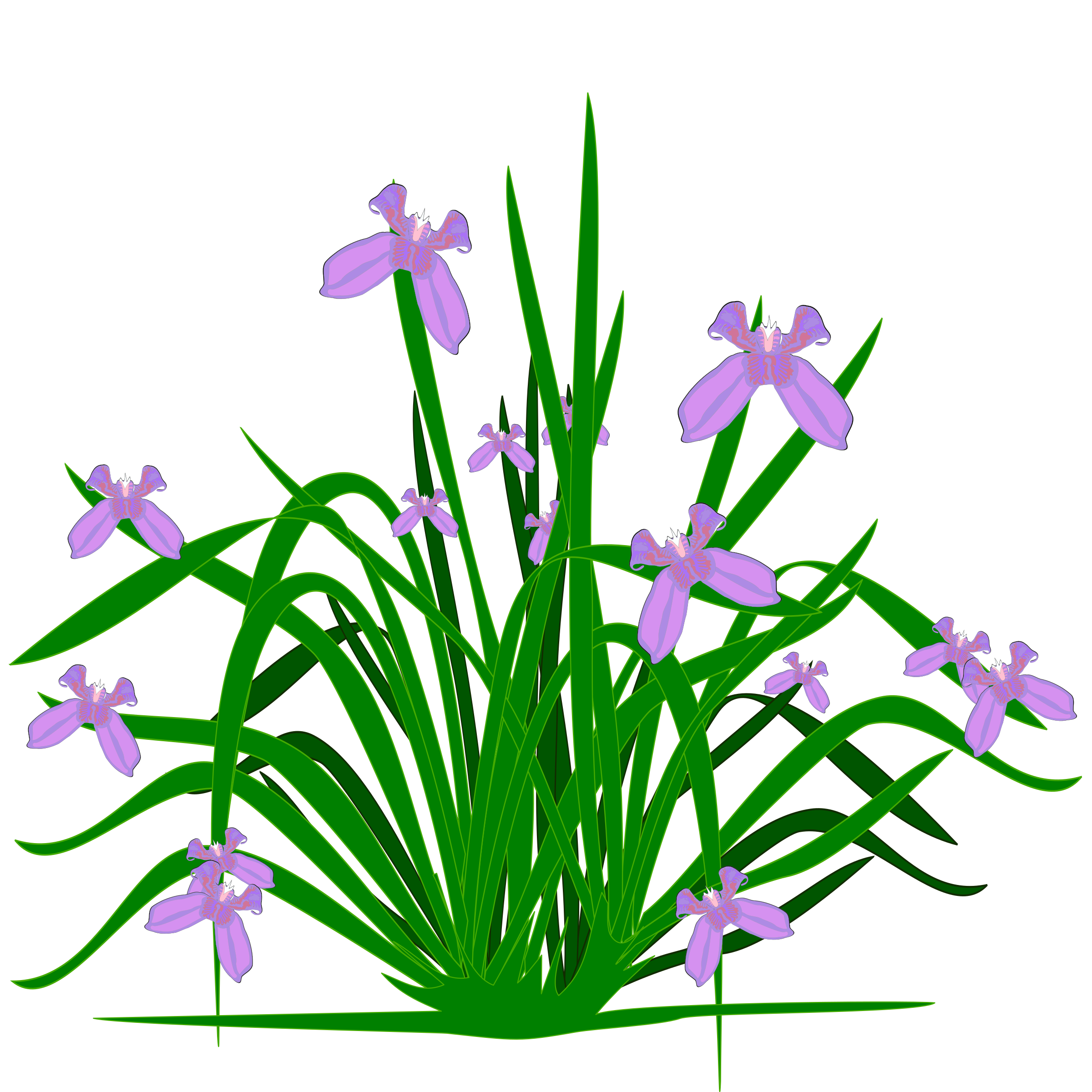 Plant a flower clipart banner freeuse download Flower Irises Iris croatica Clip art - plants 2400*2400 transprent ... banner freeuse download