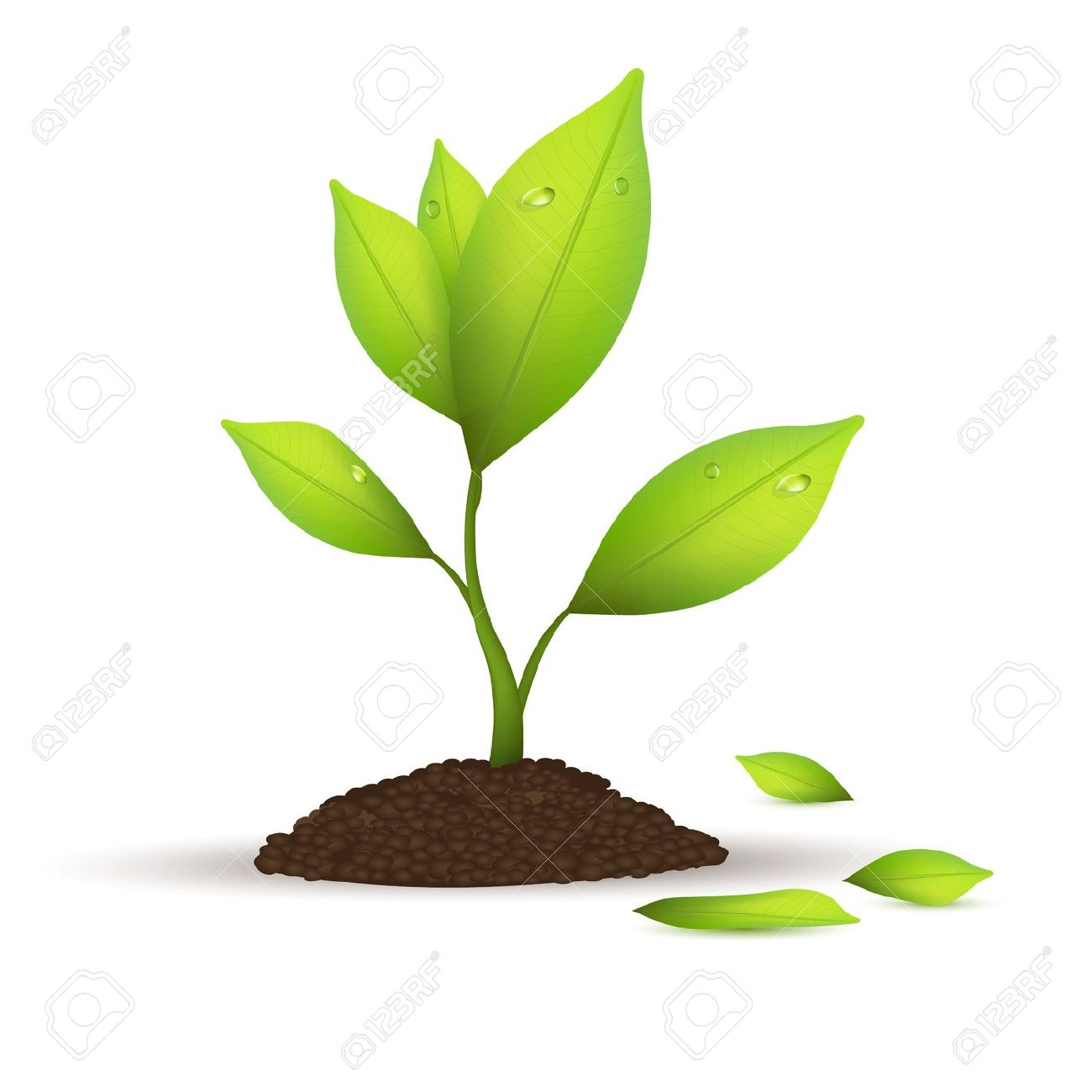 Plants clipart free graphic free library Plants Clip Art Free | Clipart Panda - Free Clipart Images graphic free library