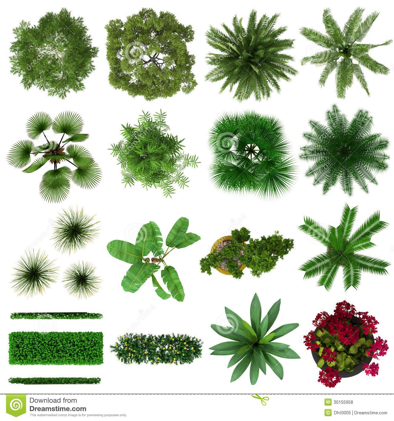 Plants plan view clipart transparent Tropical Plants Collection Top View - Download From Over 38 ... transparent