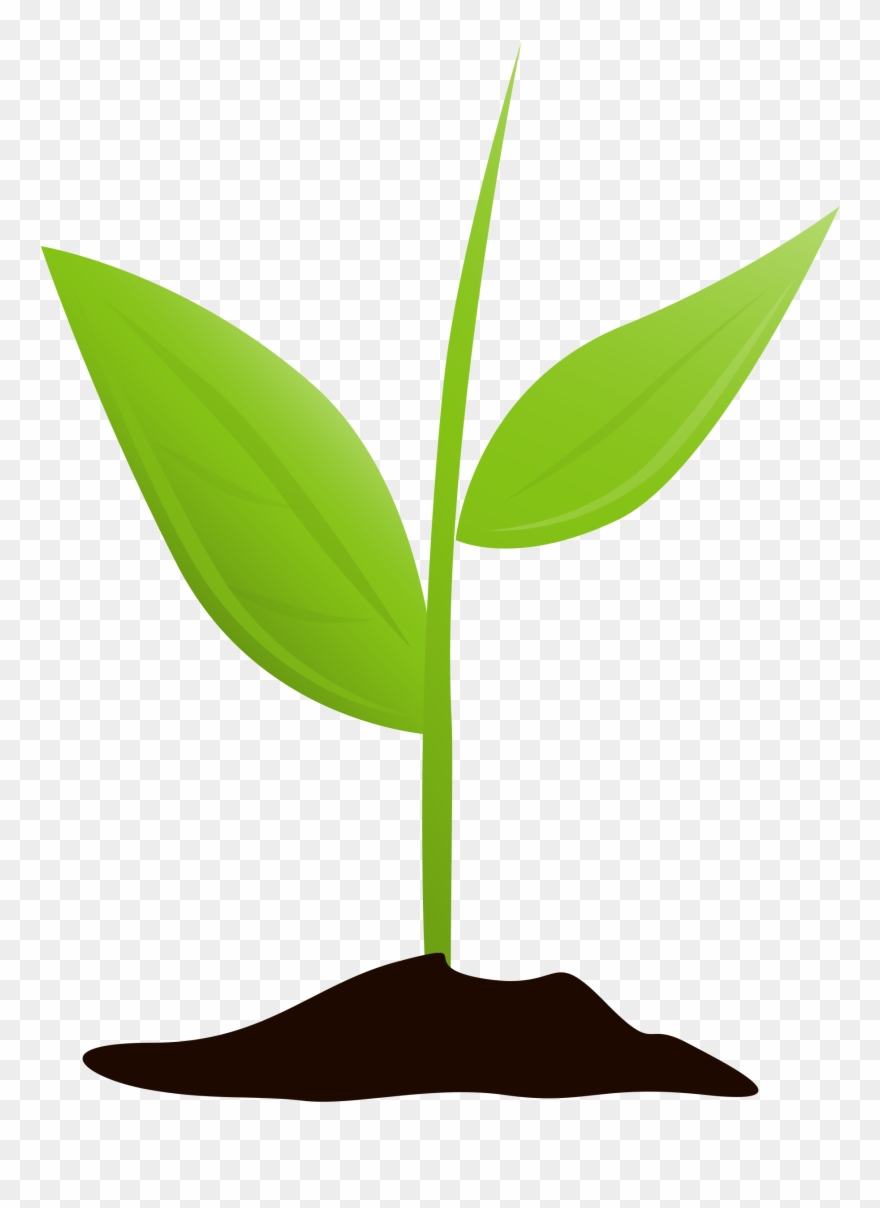 Plant grow clipart library Get Started And Grow - Plant Growing Transparent Clipart ... library