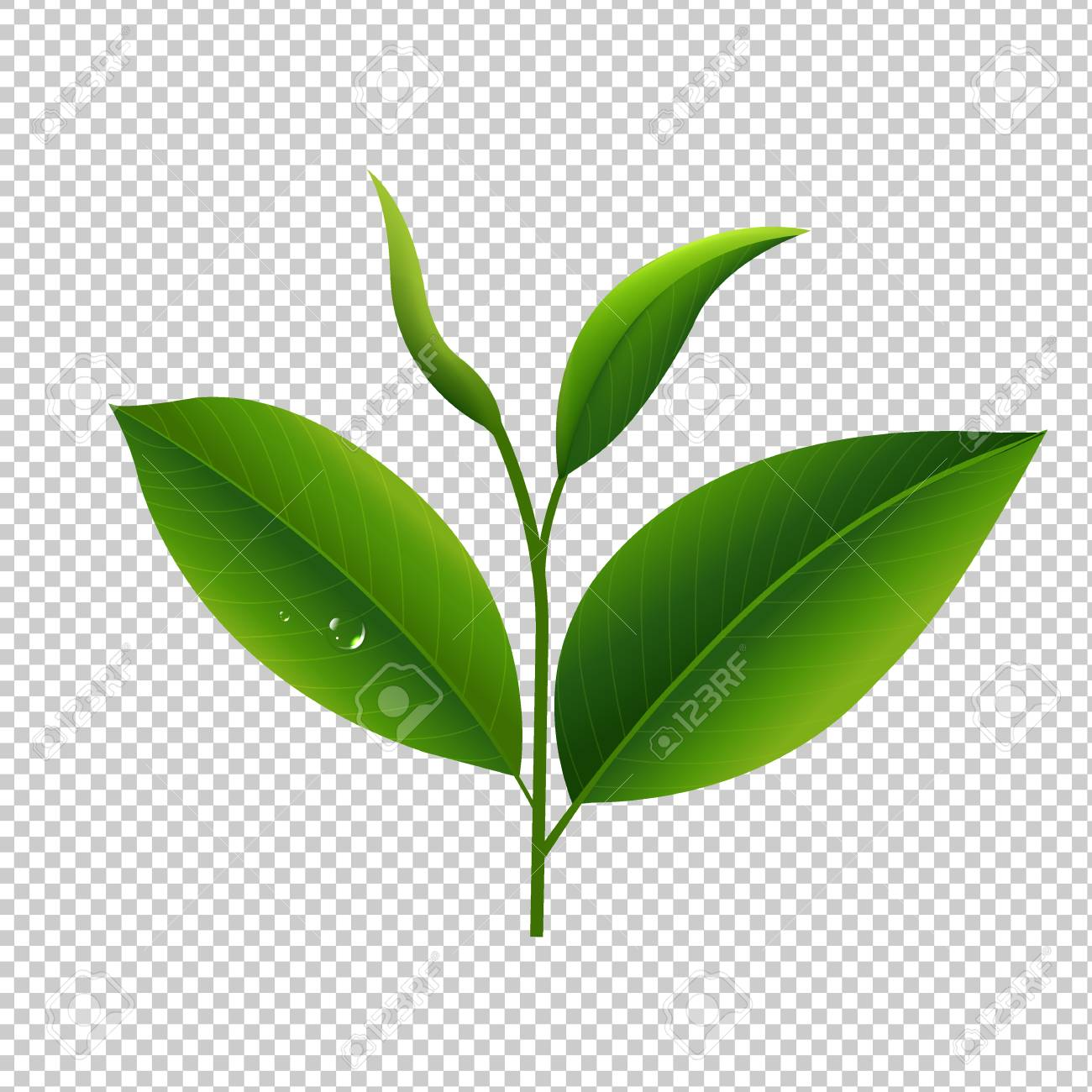 Plants transparent clipart picture royalty free download Plants clipart transparent background - 102 transparent clip ... picture royalty free download