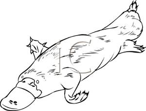 Platypus clipart black and white clipart freeuse library Black and White Fat Platypus - Royalty Free Clipart Picture clipart freeuse library