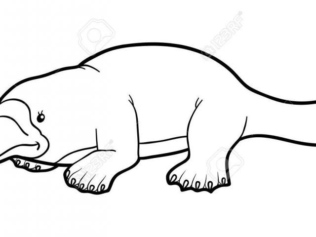 Platypus clipart black and white clip art library Free Platypus Clipart, Download Free Clip Art on Owips.com clip art library