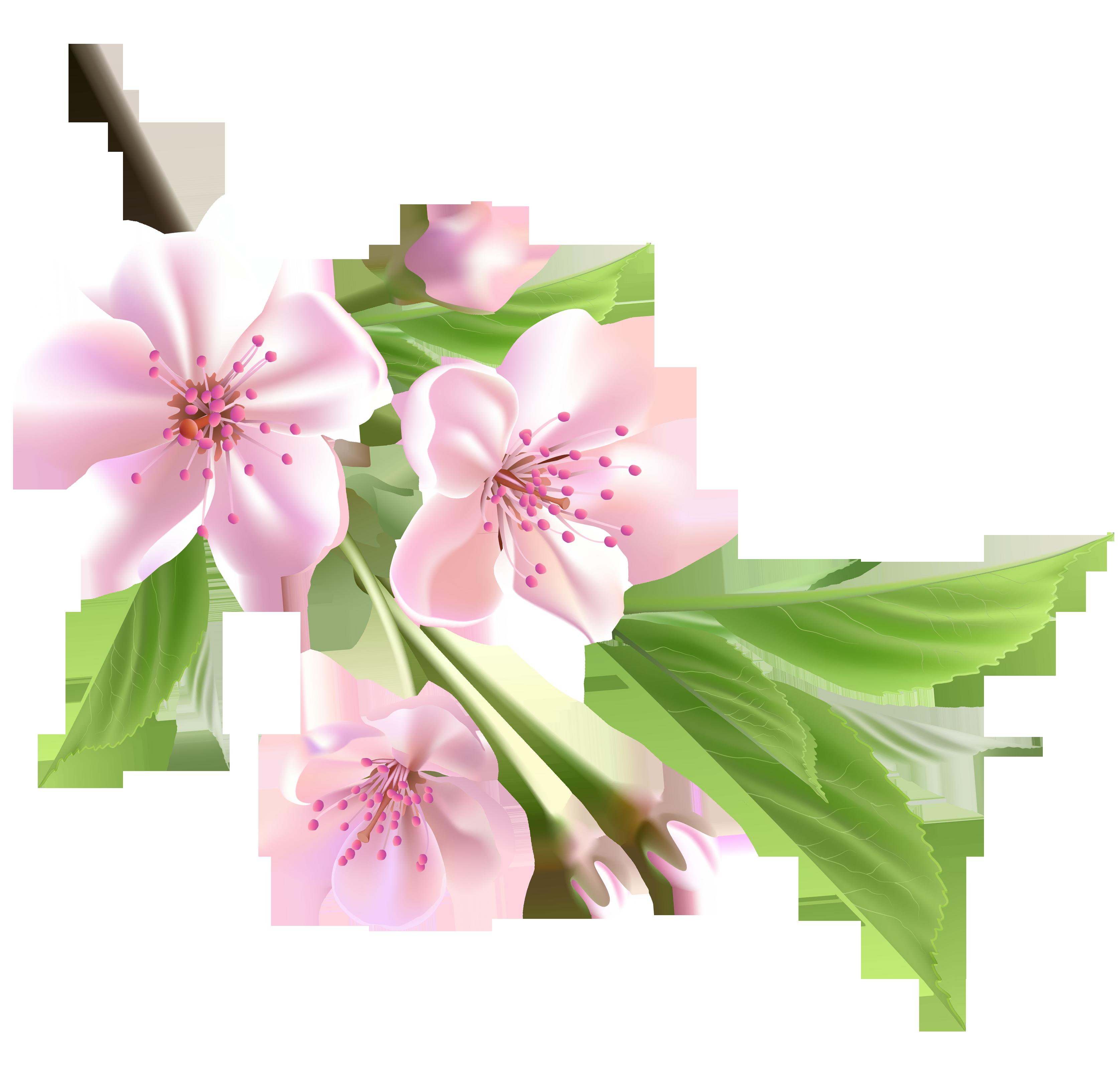 Plum flower clipart jpg library download Spring flowers, Spring and Flower on Pinterest | FLOWERS | Pinterest ... jpg library download