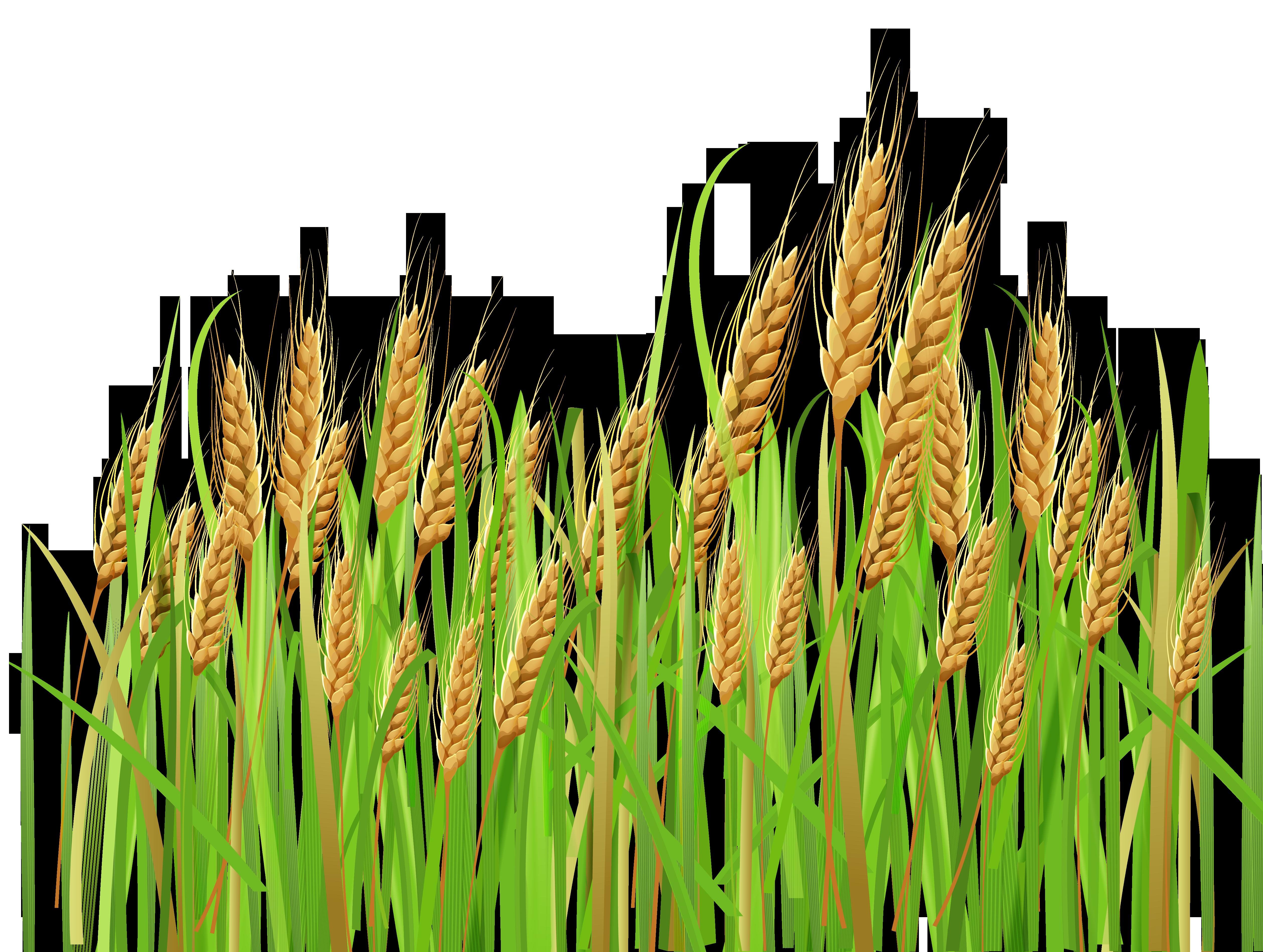 Star field clipart vector stock Clipart Wheat & Wheat Clip Art Images - ClipartALL.com vector stock