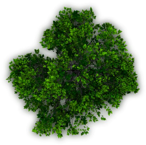 Png landscape clipart tree png jpg library library TOP TREE - Buscar con Google | Photoshop Resources | Pinterest ... jpg library library
