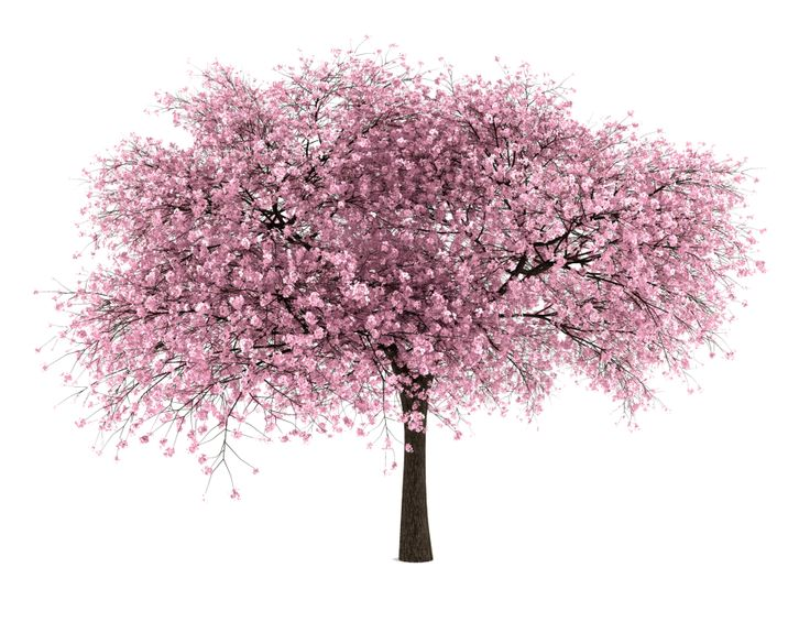 Png landscape clipart tree png clipart library Png landscape clipart tree png - ClipartFox clipart library