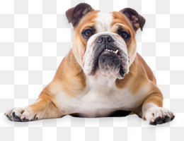 Pngs of bulldogs png free library Toy Bulldog png free download - French Bulldog Toy Bulldog ... png free library