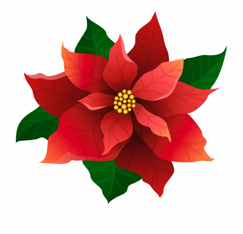 Poinettia clipart vector Poinsettia Clipart Christmas Candle Light Free PNG Images ... vector