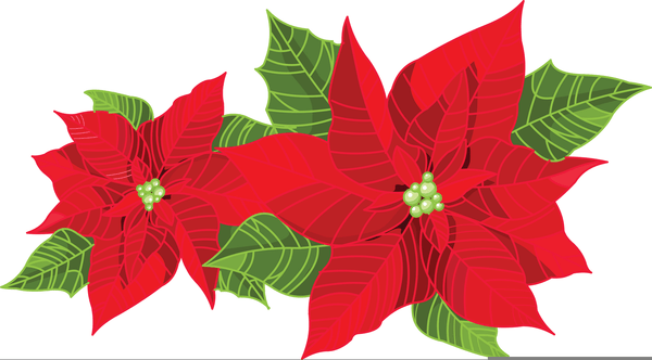 Poinsettia plant clipart png library library Poinsettia plant clipart » Clipart Portal png library library
