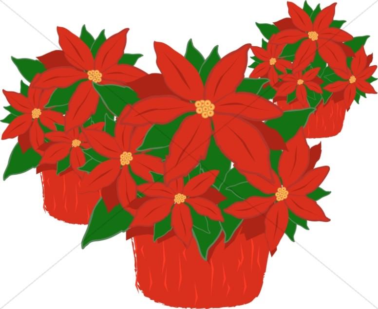 Poinsettia plant clipart clip black and white download Trio of Poinsettia Plants | Religious Christmas Clipart clip black and white download