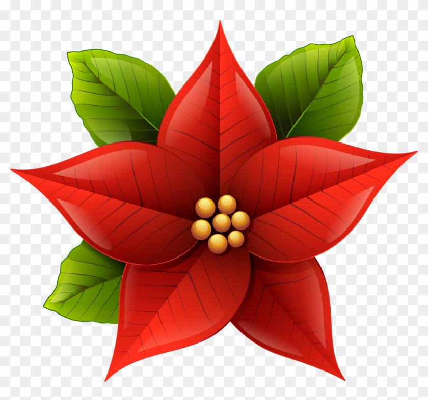 Poinsettias clipart with transparent background clipart freeuse stock Christmas Poinsettia Png Clip-art Image - Christmas Flower ... clipart freeuse stock