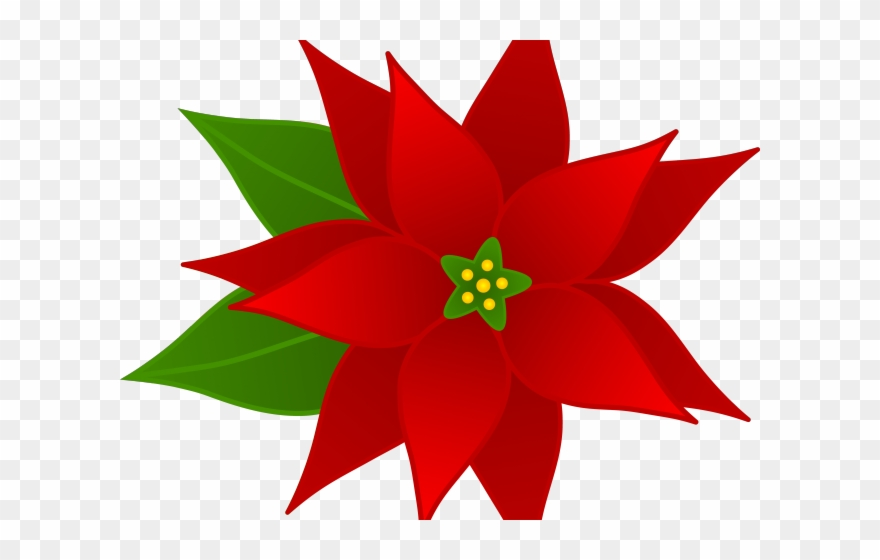 Poinsettias clipart with transparent background clip library download Christmas Poinsettia Clipart - Transparent Poinsettia ... clip library download