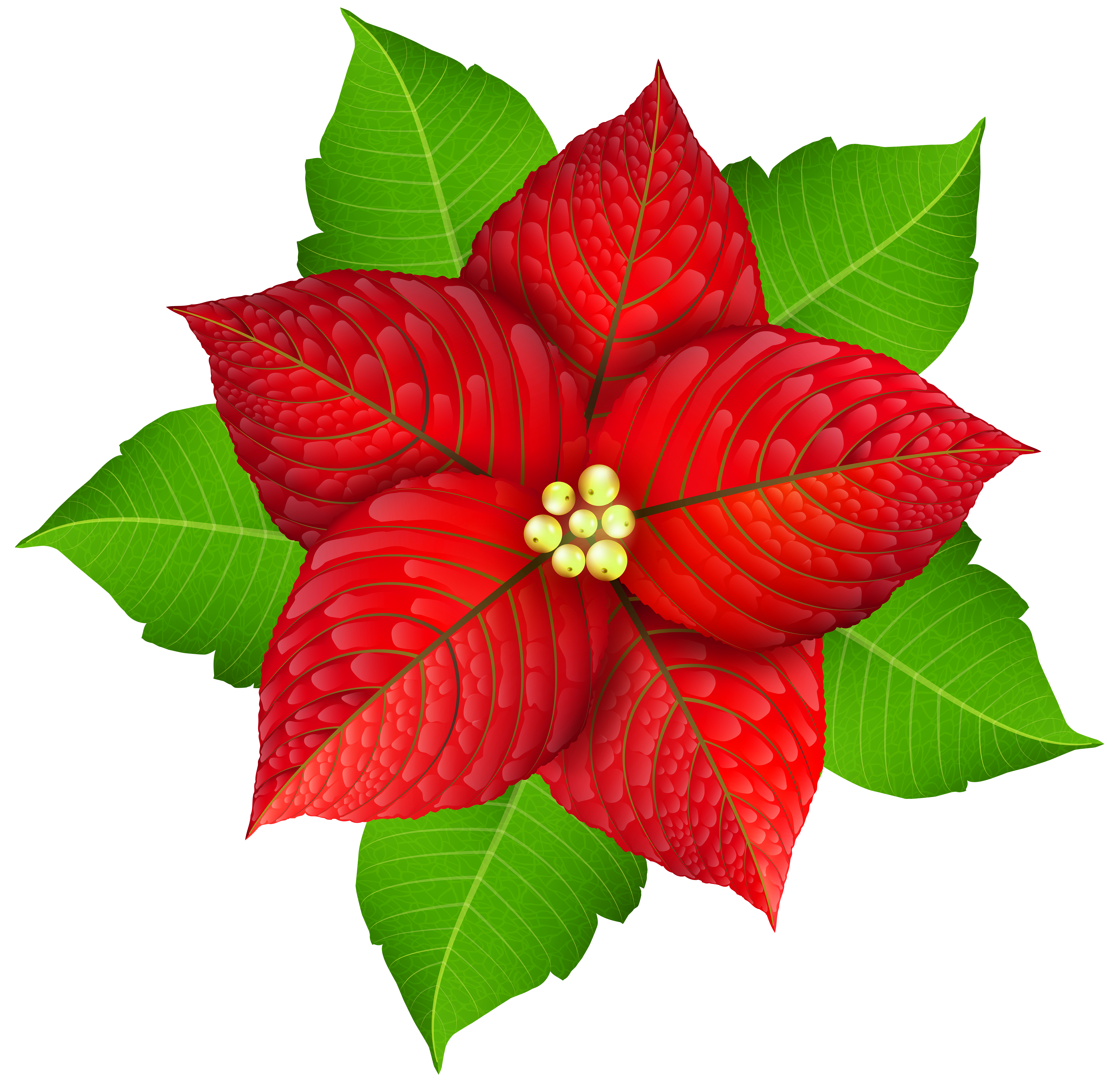 Poinsettias clipart with transparent background graphic transparent download Christmas Poinsettia Transparent PNG Image | Gallery ... graphic transparent download