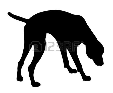 Pointer dog clipart clipart black and white 1,079 Pointer Dog Stock Vector Illustration And Royalty Free ... clipart black and white