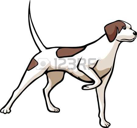 Pointer dog clipart picture freeuse 1,079 Pointer Dog Stock Vector Illustration And Royalty Free ... picture freeuse