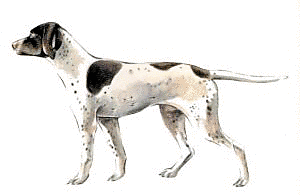 Pointer dog clipart svg library Free Dog Clipart, 1 page of Public Domain Clip Art svg library