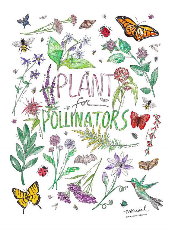 Pollinator garden clipart clip royalty free stock Plant for Pollinators Watercolor Art Print / Garden ... clip royalty free stock