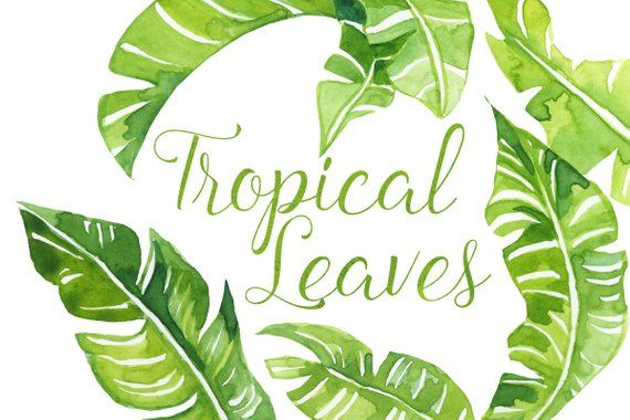 Polynesian clipart image black and white Watercolor Tropical palm Leaves Clip Art, Tropics clipart ... image black and white