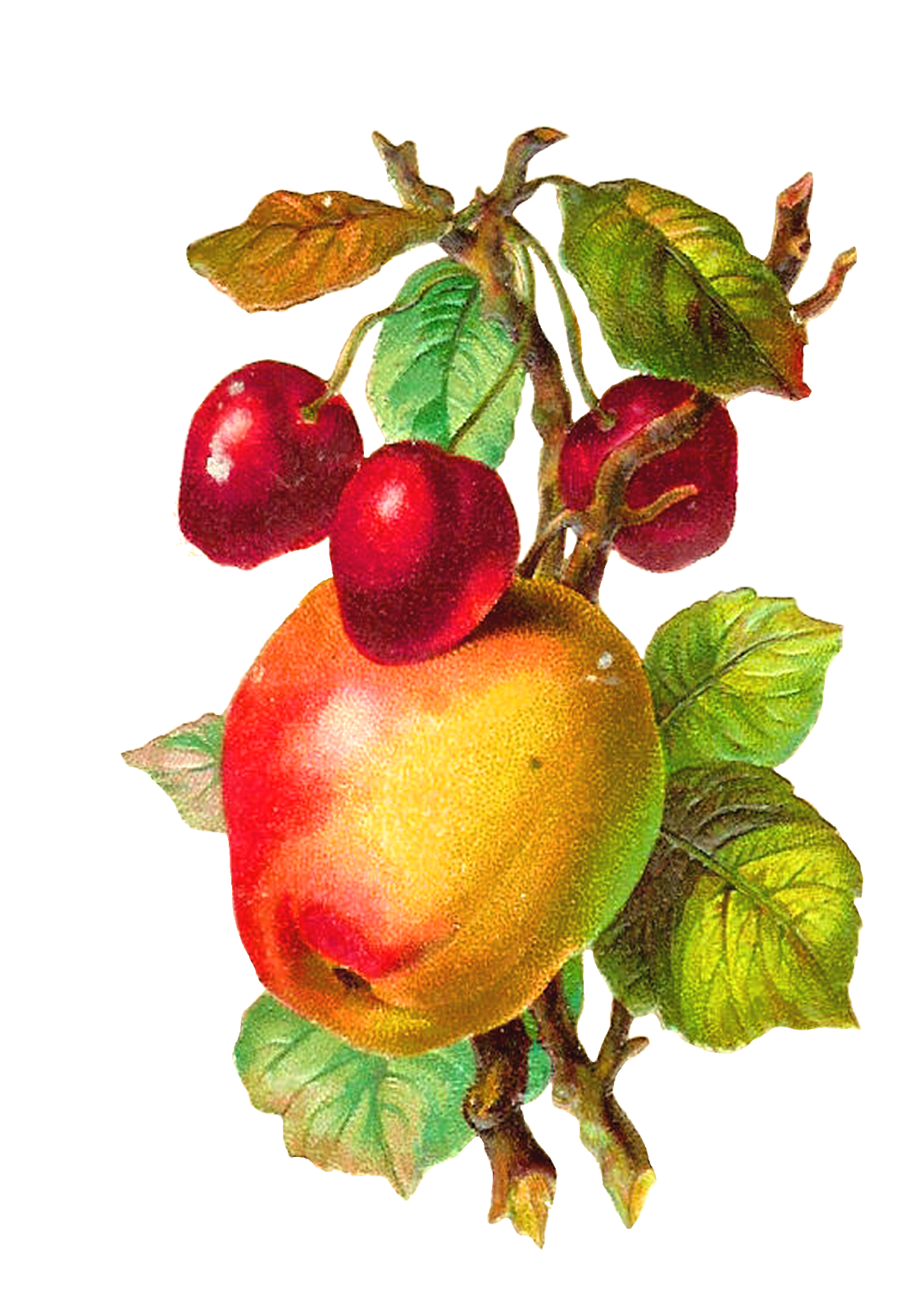 Victorian apple clipart jpg library download Antique Images: August 2013 jpg library download