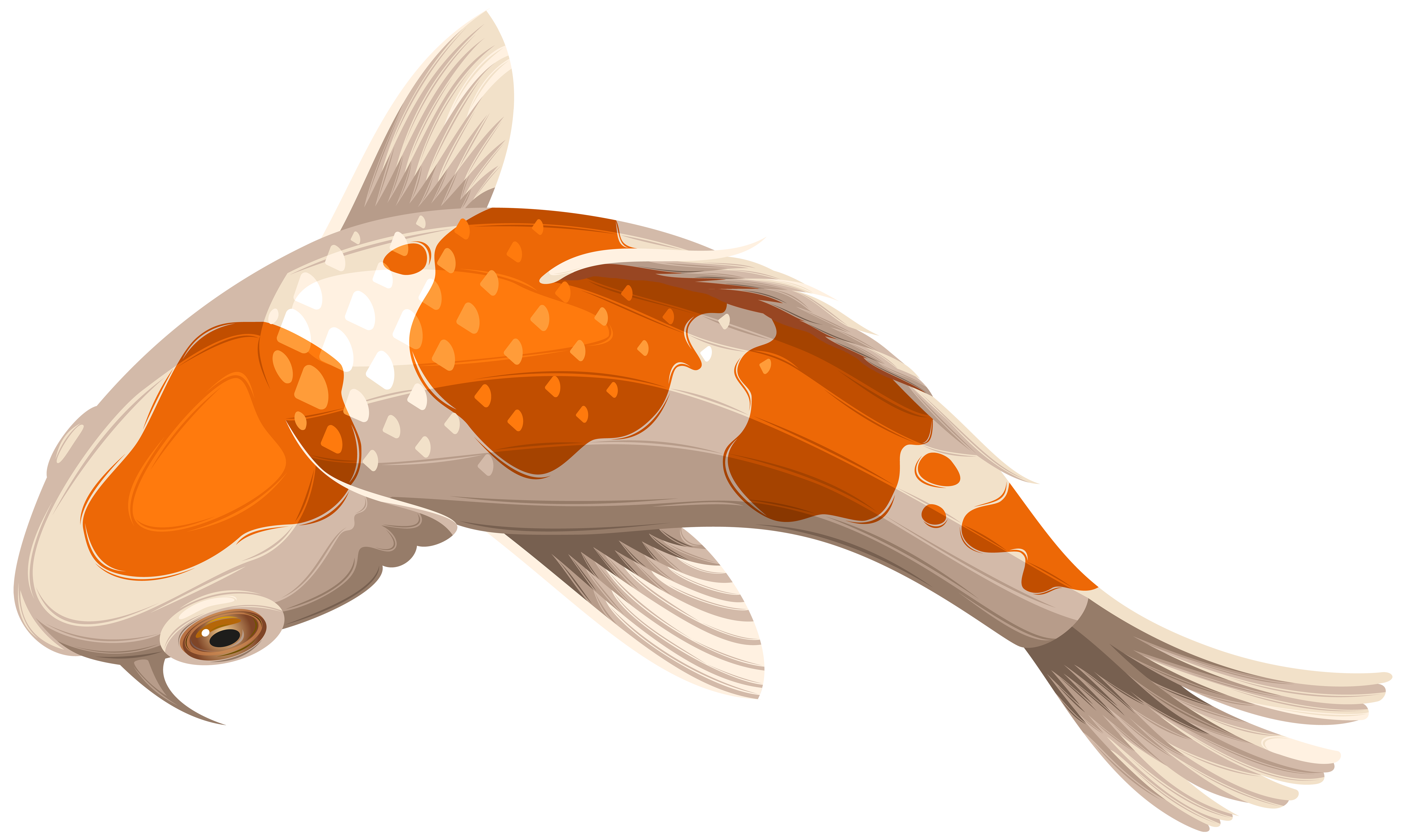Pond fish clipart vector transparent download Koi Showa Goldfish Clip art - White and Orange Koi Fish Transparent ... vector transparent download